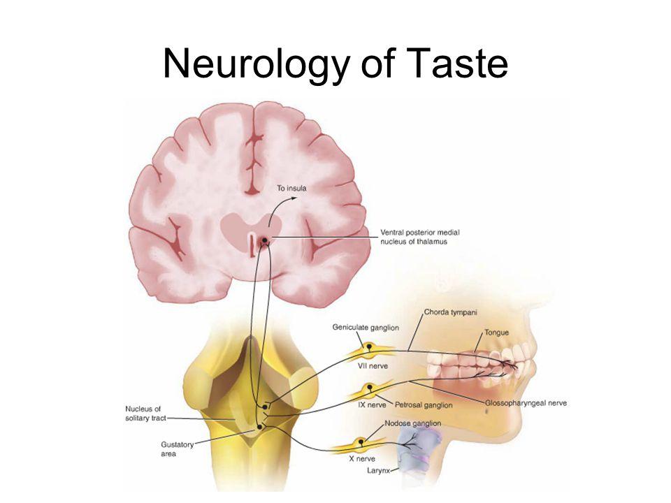 Neurology of Taste