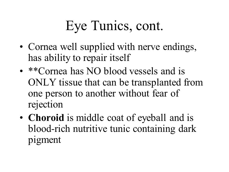 Eye Tunics, cont. Cornea well supplied with nerve endings, has ability to repair itself.