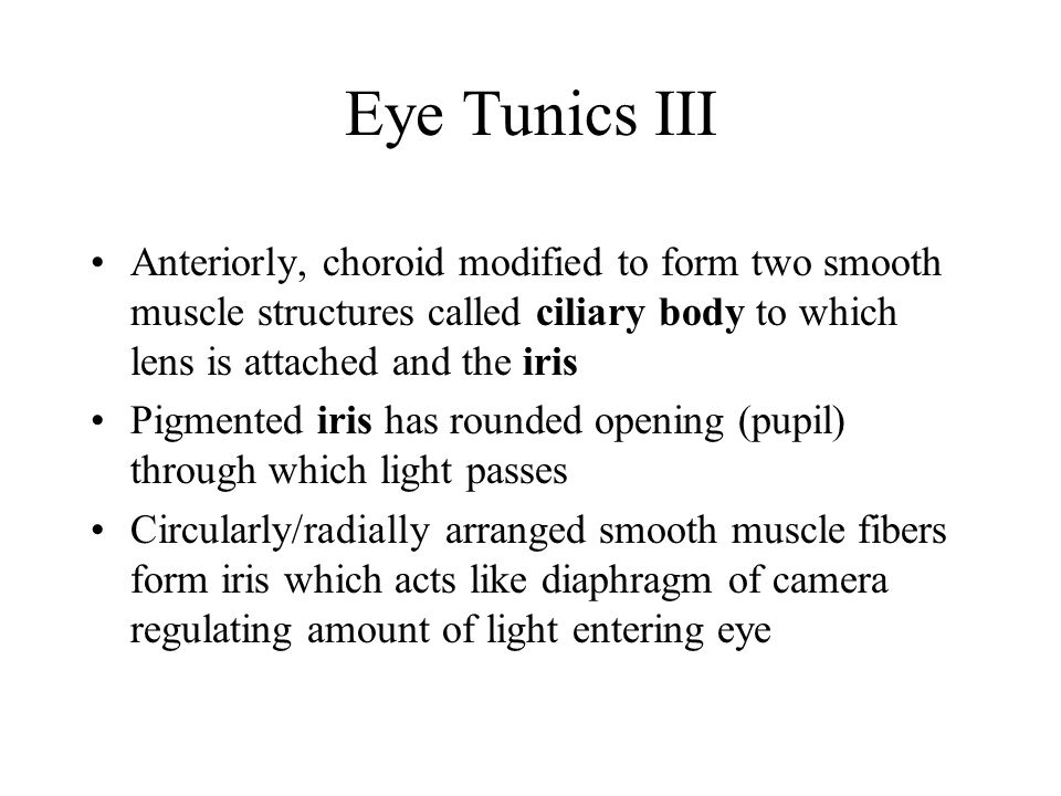 Eye Tunics III Anteriorly, choroid modified to form two smooth muscle structures called ciliary body to which lens is attached and the iris.