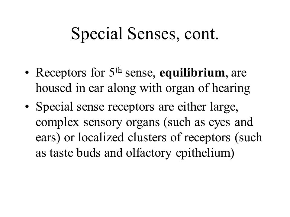 Special Senses, cont. Receptors for 5th sense, equilibrium, are housed in ear along with organ of hearing.
