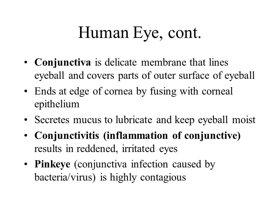 Human Eye, cont. Conjunctiva is delicate membrane that lines eyeball and covers parts of outer surface of eyeball.