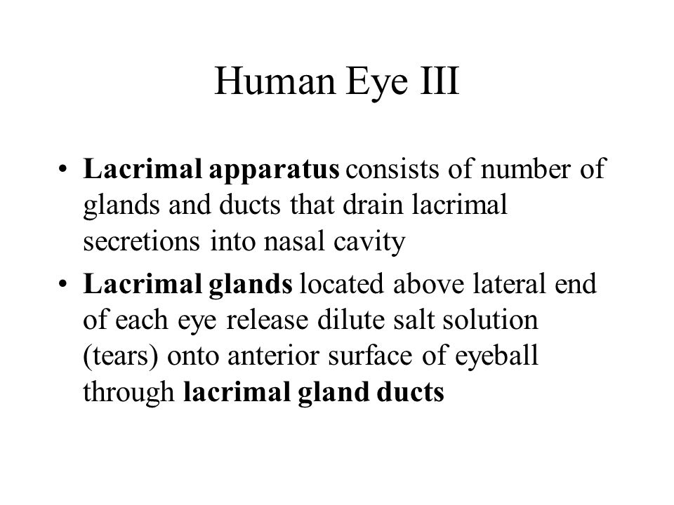 Human Eye III Lacrimal apparatus consists of number of glands and ducts that drain lacrimal secretions into nasal cavity.