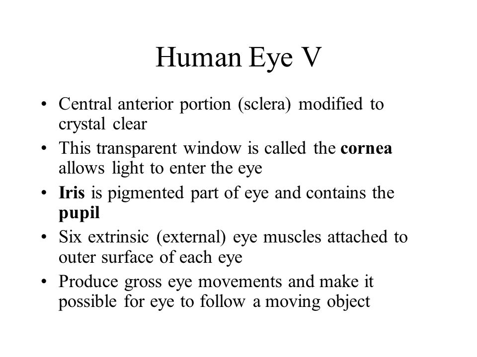 Human Eye V Central anterior portion (sclera) modified to crystal clear. This transparent window is called the cornea allows light to enter the eye.