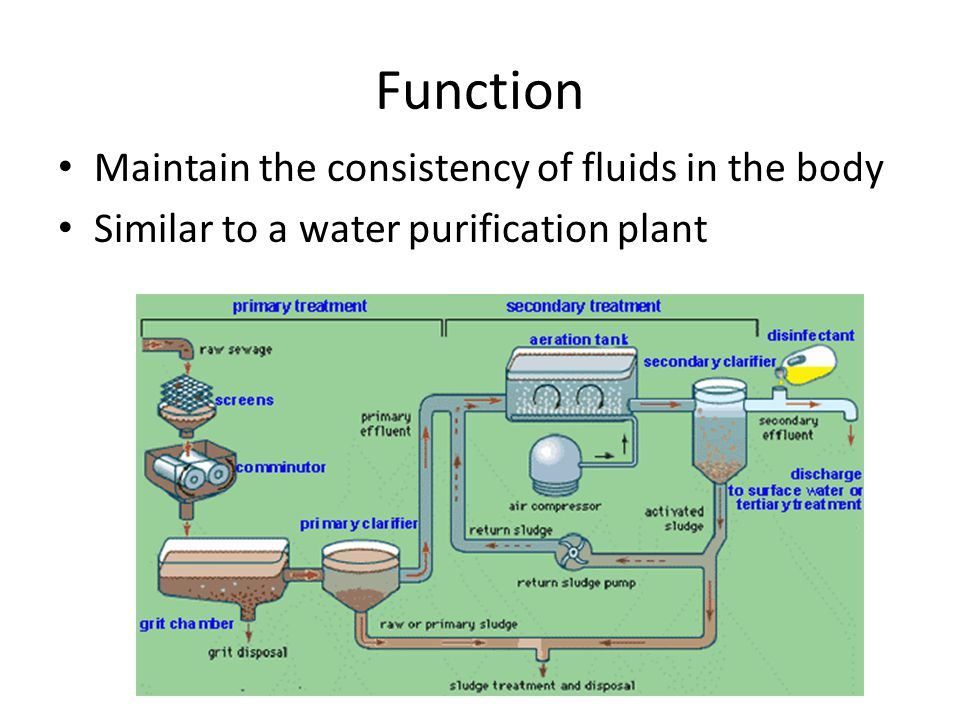 Function Maintain the consistency of fluids in the body