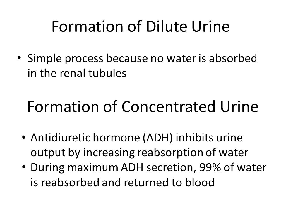 Formation of Dilute Urine
