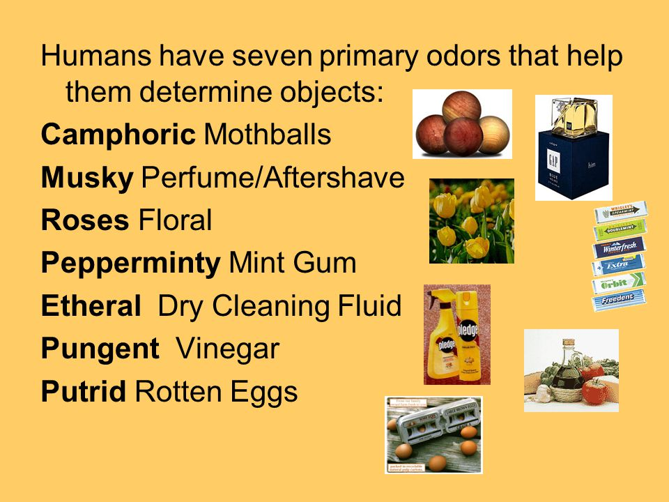 Humans have seven primary odors that help them determine objects: