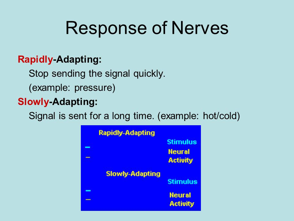 Response of Nerves Rapidly-Adapting: Stop sending the signal quickly.