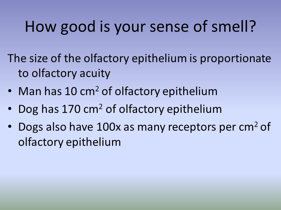 How good is your sense of smell