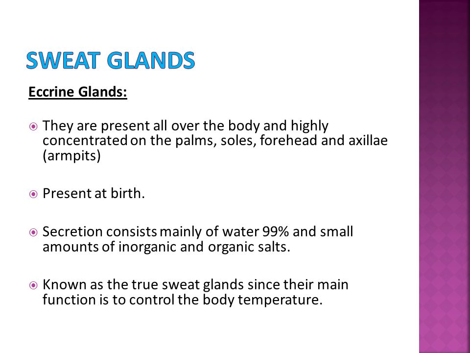 Sweat Glands Eccrine Glands: