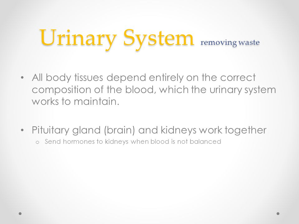 Urinary System removing waste