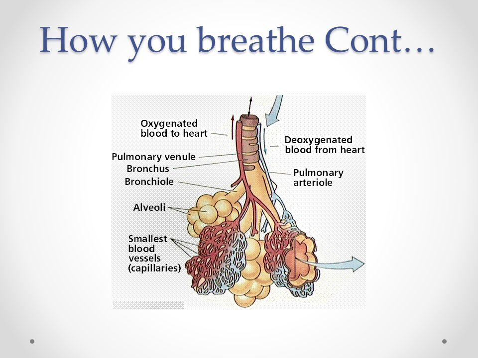How you breathe Cont…