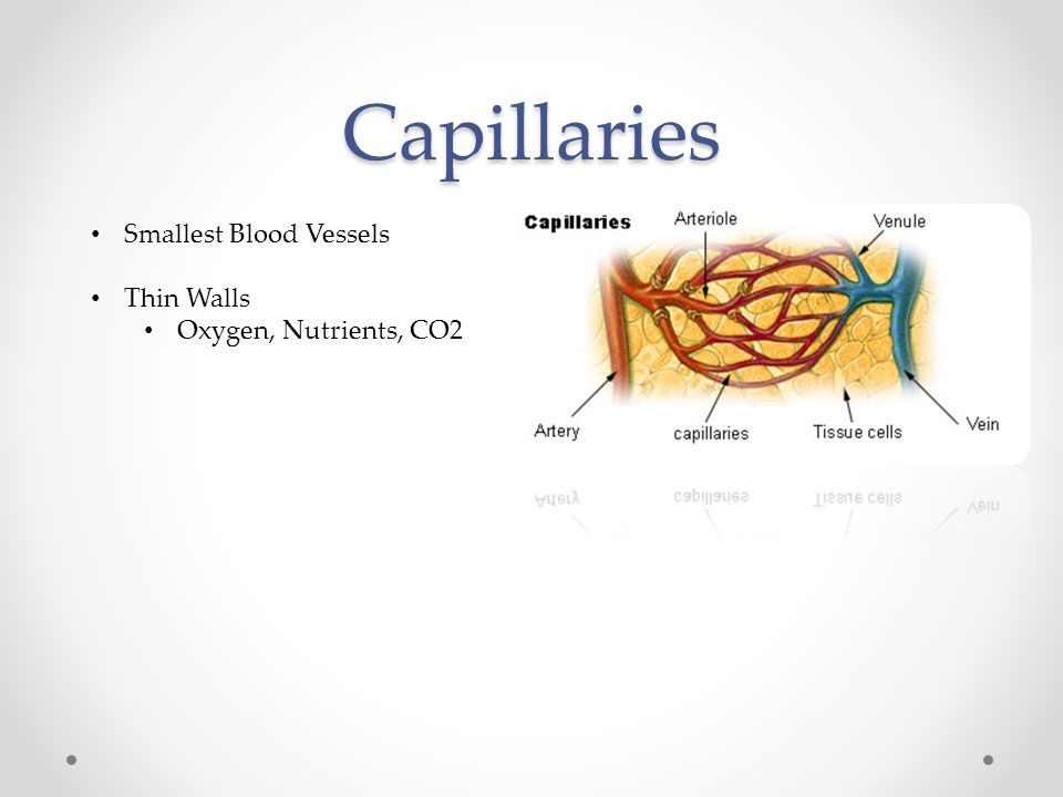 Capillaries Smallest Blood Vessels Thin Walls Oxygen, Nutrients, CO2
