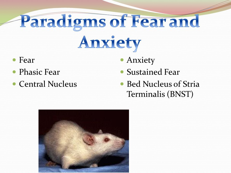 Paradigms of Fear and Anxiety