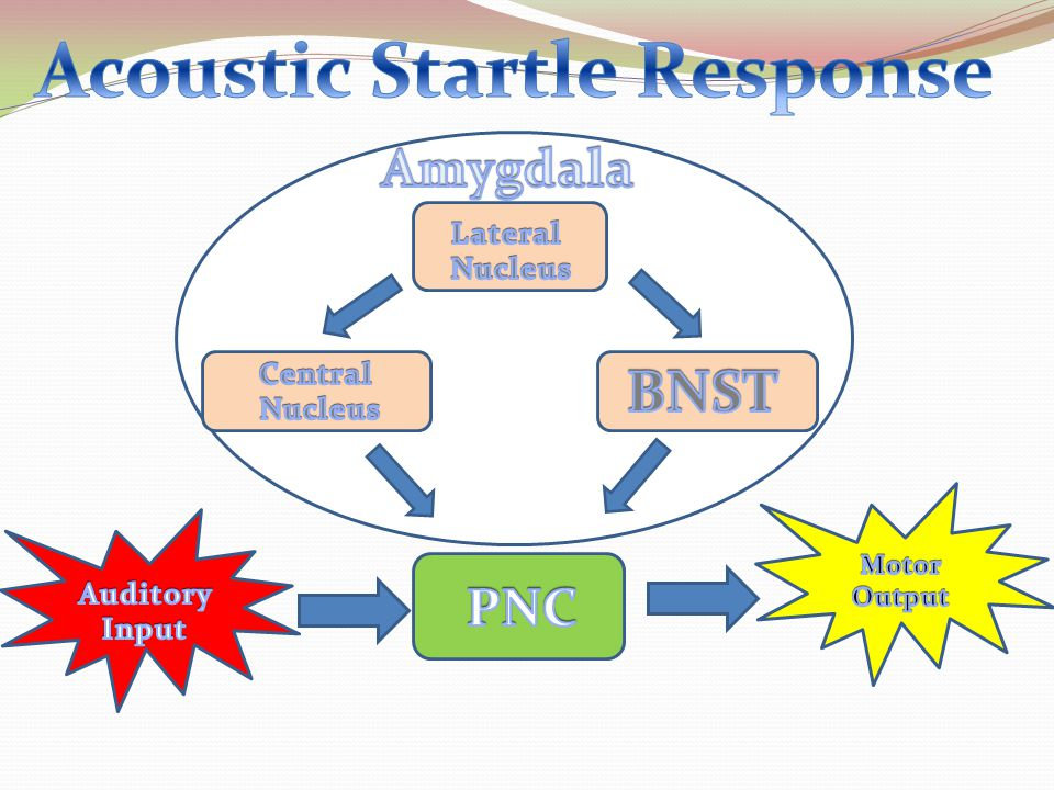 Acoustic Startle Response
