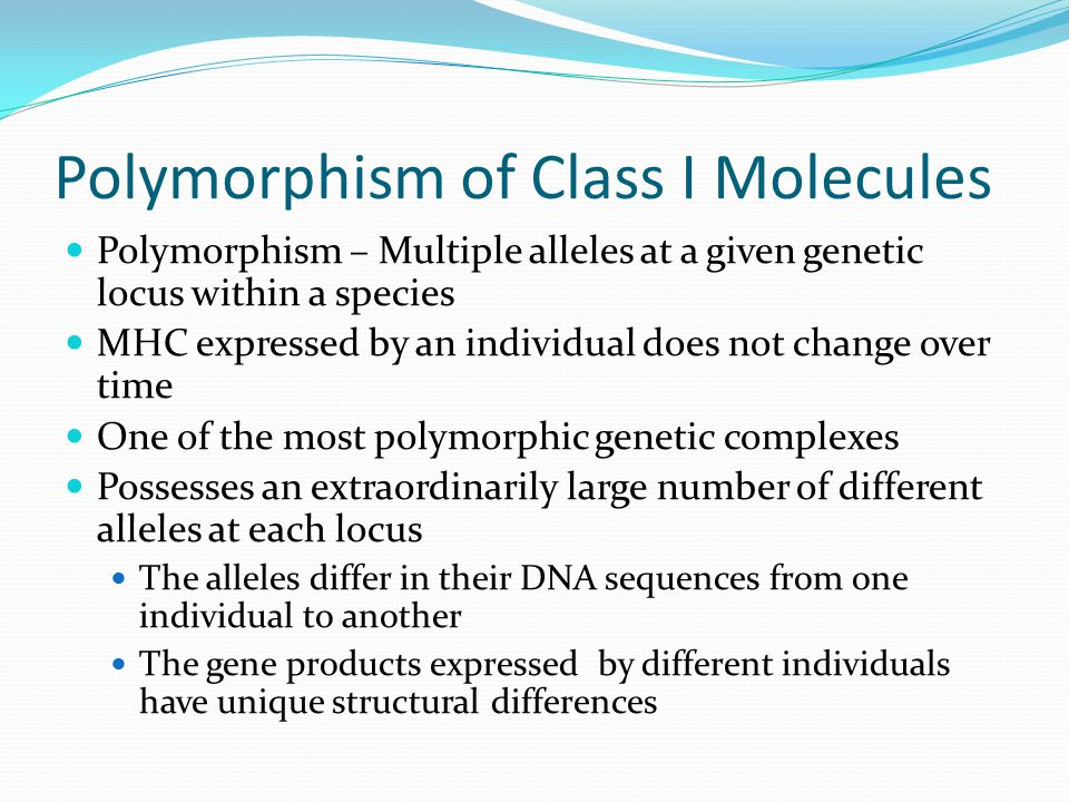 Polymorphism of Class I Molecules