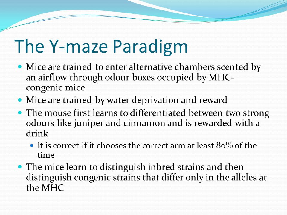 The Y-maze Paradigm Mice are trained to enter alternative chambers scented by an airflow through odour boxes occupied by MHC-congenic mice.