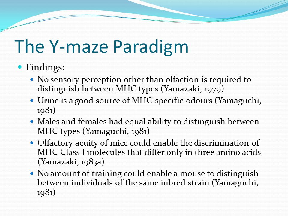 The Y-maze Paradigm Findings: