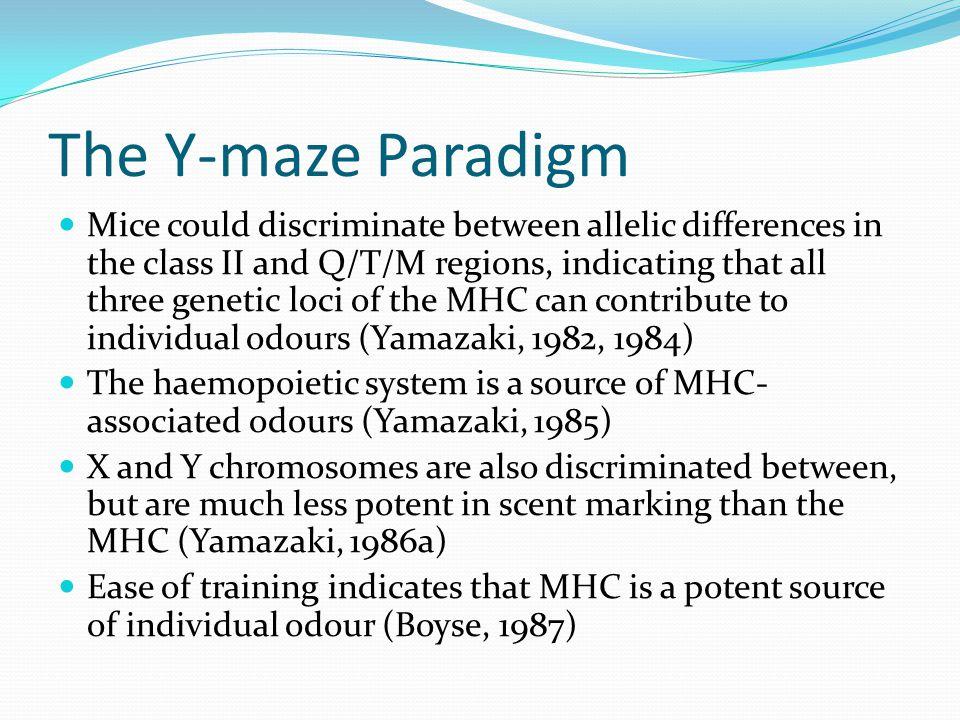 The Y-maze Paradigm