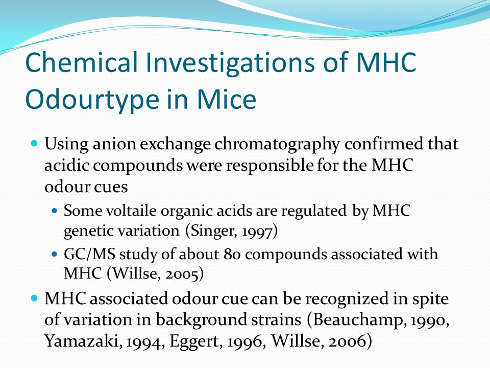 Chemical Investigations of MHC Odourtype in Mice