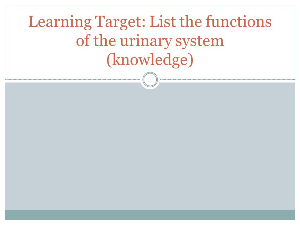 Learning Target: List the functions of the urinary system (knowledge)