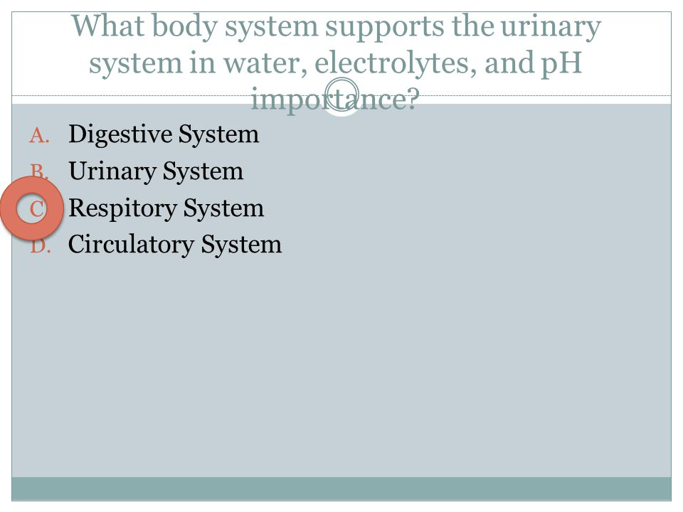 What body system supports the urinary system in water, electrolytes, and pH importance