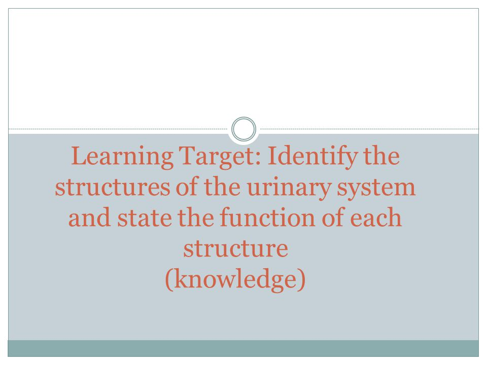 Learning Target: Identify the structures of the urinary system and state the function of each structure (knowledge)