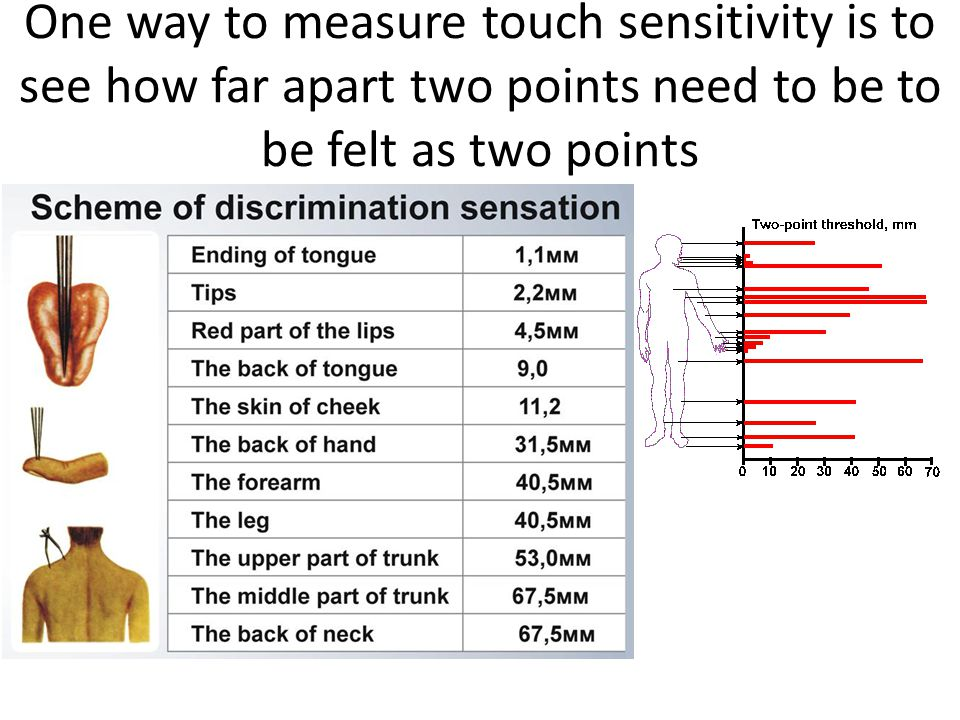 One way to measure touch sensitivity is to see how far apart two points need to be to be felt as two points