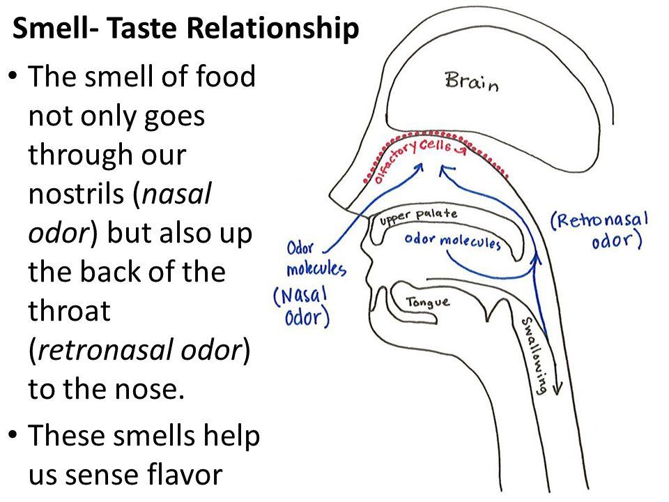 Smell- Taste Relationship