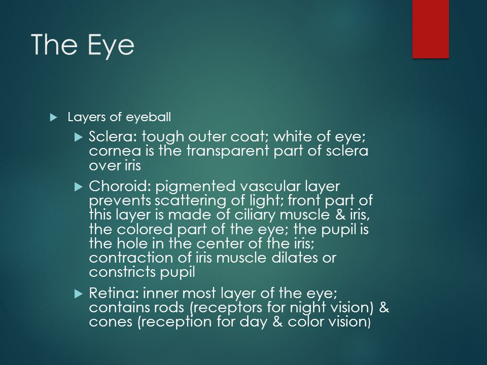 The Eye Layers of eyeball. Sclera: tough outer coat; white of eye; cornea is the transparent part of sclera over iris.