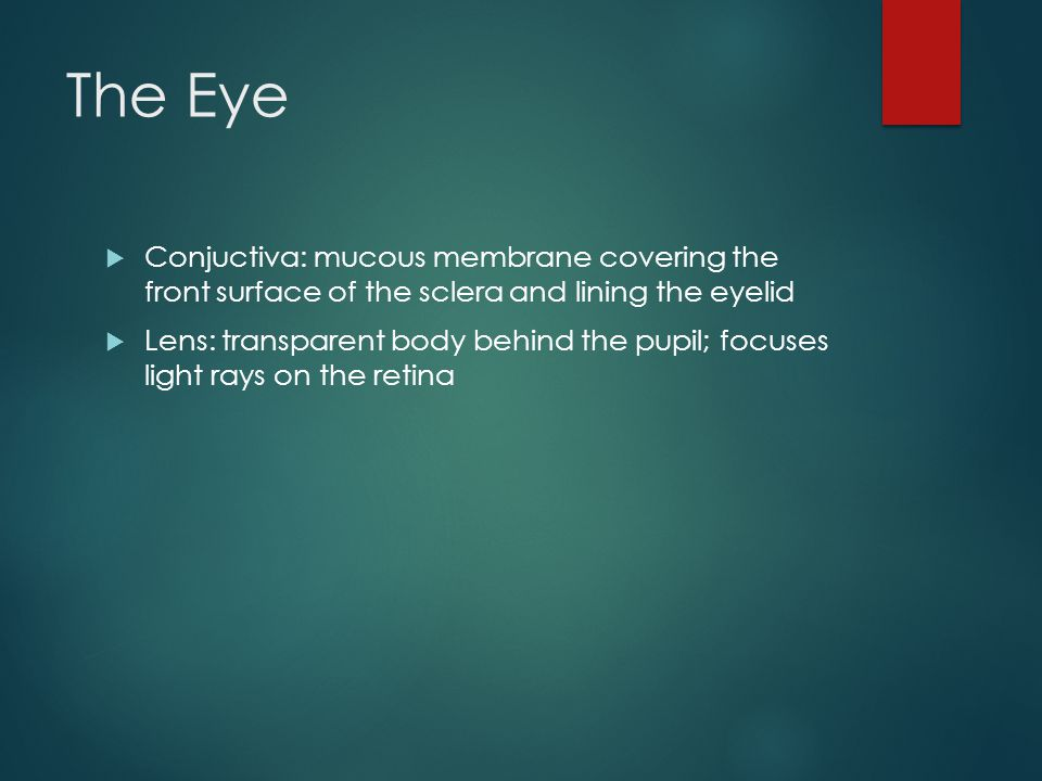 The Eye Conjuctiva: mucous membrane covering the front surface of the sclera and lining the eyelid.