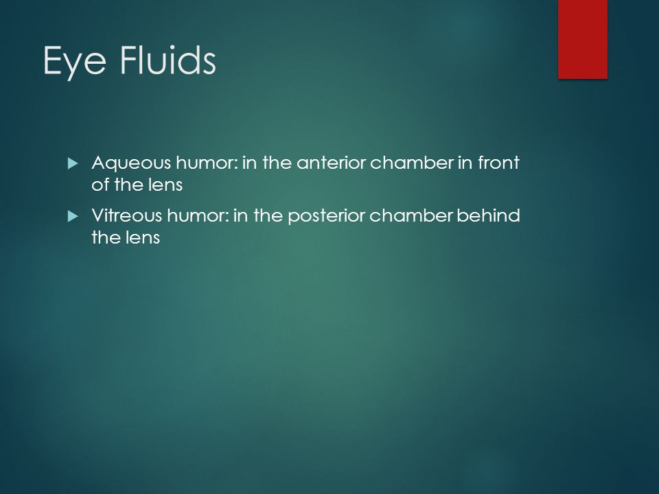Eye Fluids Aqueous humor: in the anterior chamber in front of the lens