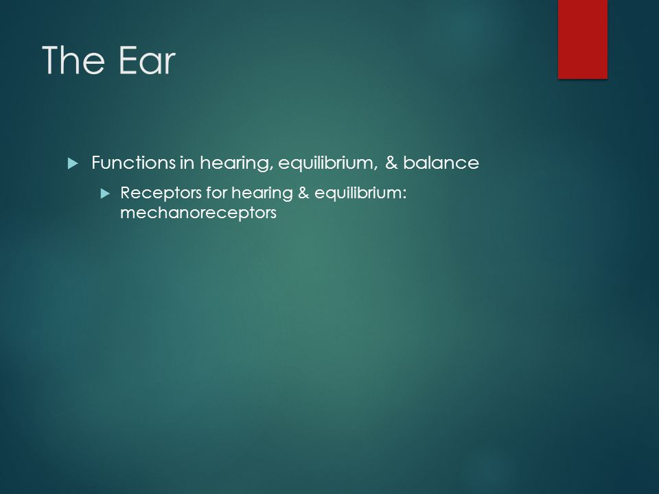 The Ear Functions in hearing, equilibrium, & balance