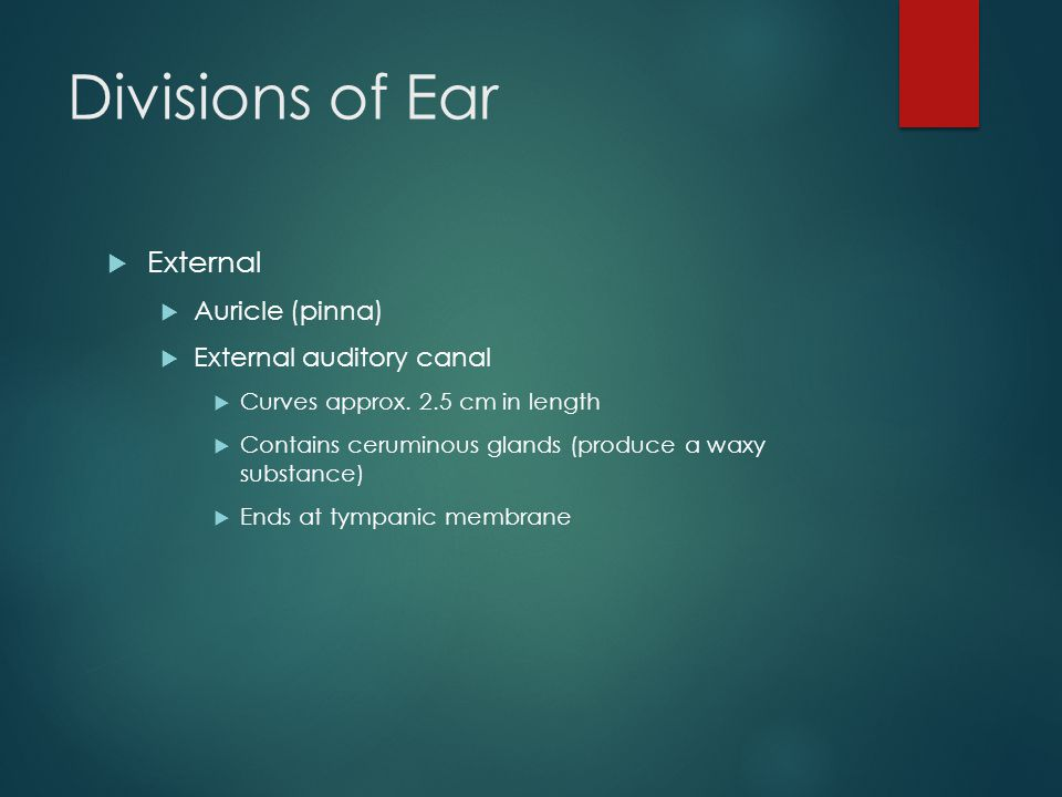 Divisions of Ear External Auricle (pinna) External auditory canal