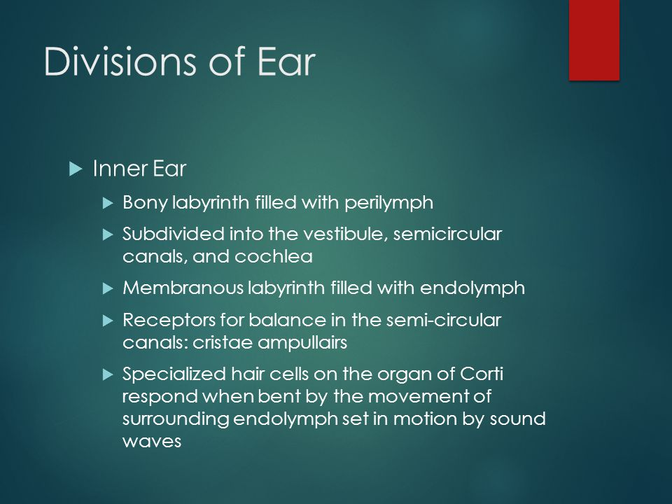 Divisions of Ear Inner Ear Bony labyrinth filled with perilymph