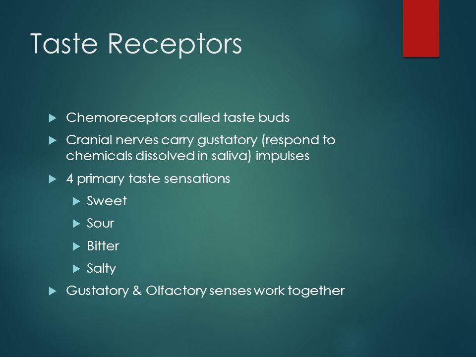 Taste Receptors Chemoreceptors called taste buds