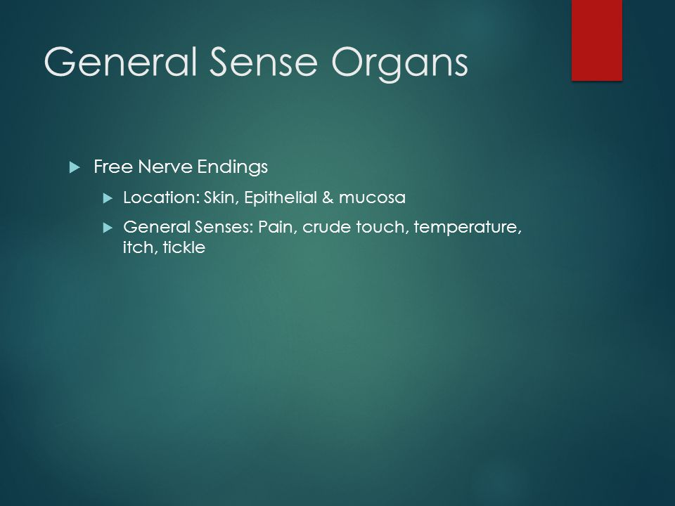 General Sense Organs Free Nerve Endings