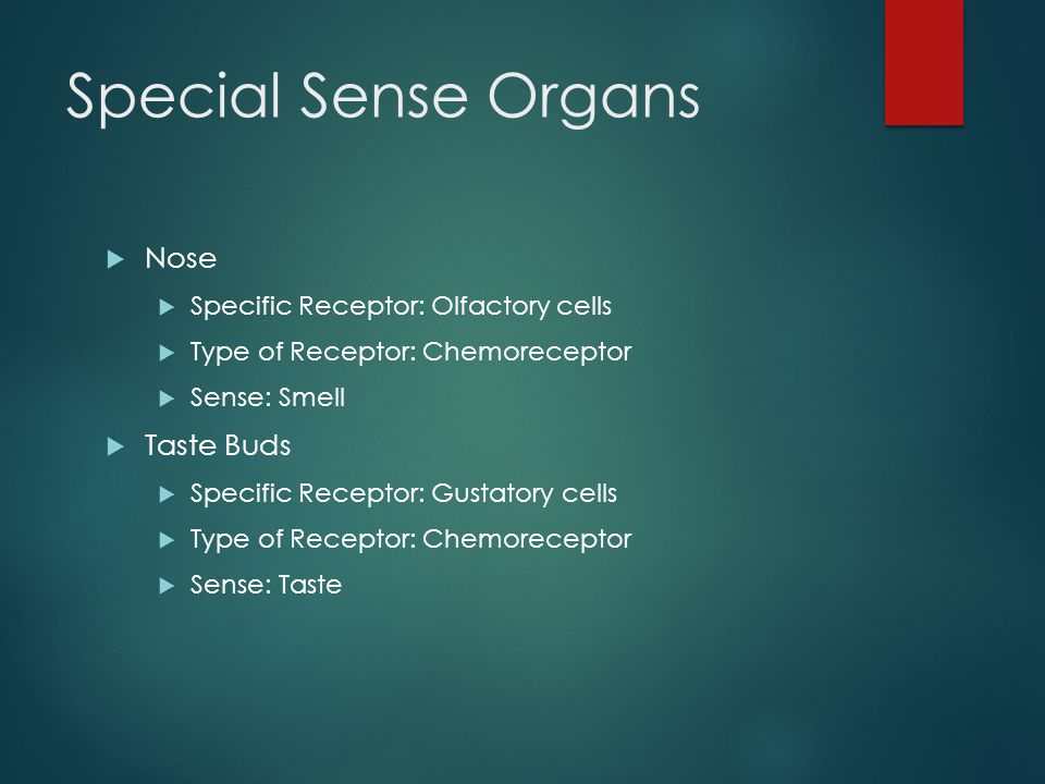 Special Sense Organs Nose Taste Buds