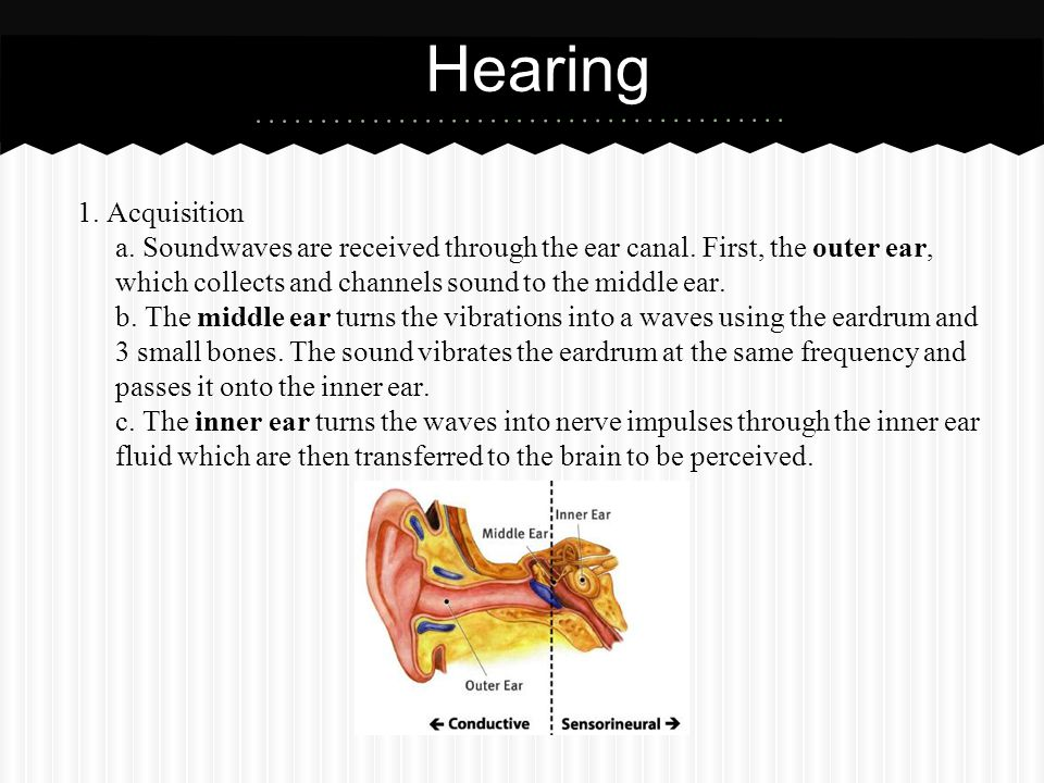 Hearing 1. Acquisition. a. Soundwaves are received through the ear canal. First, the outer ear, which collects and channels sound to the middle ear.