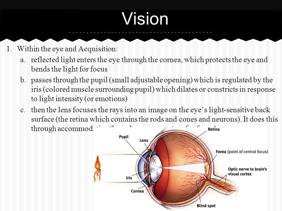 Vision Within the eye and Acquisition: