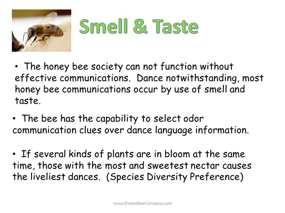 Smell & Taste