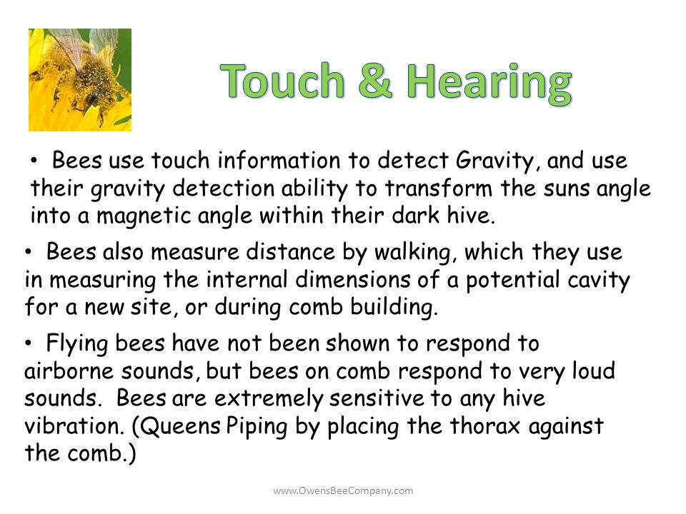Touch & Hearing