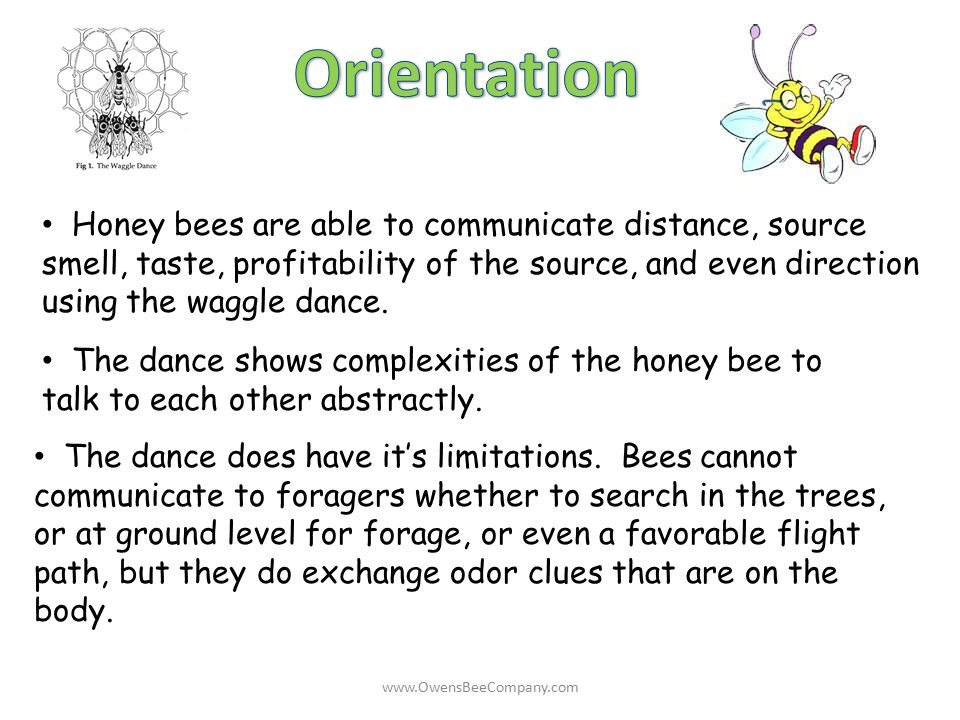 Orientation Honey bees are able to communicate distance, source smell, taste, profitability of the source, and even direction using the waggle dance.