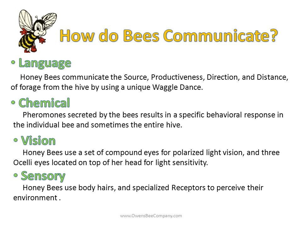 How do Bees Communicate
