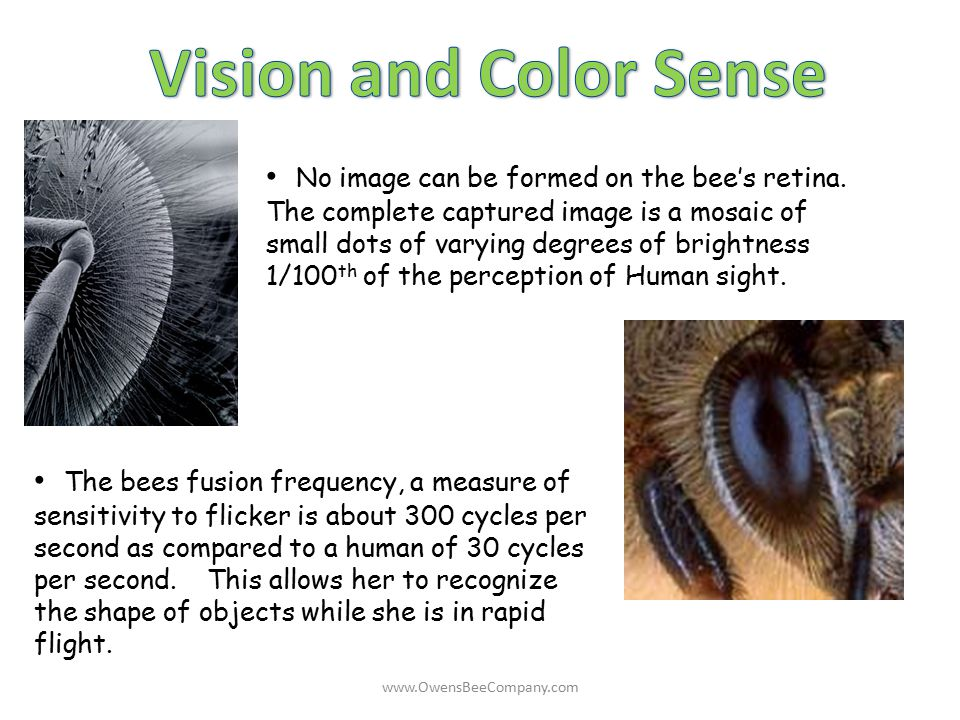 Vision and Color Sense