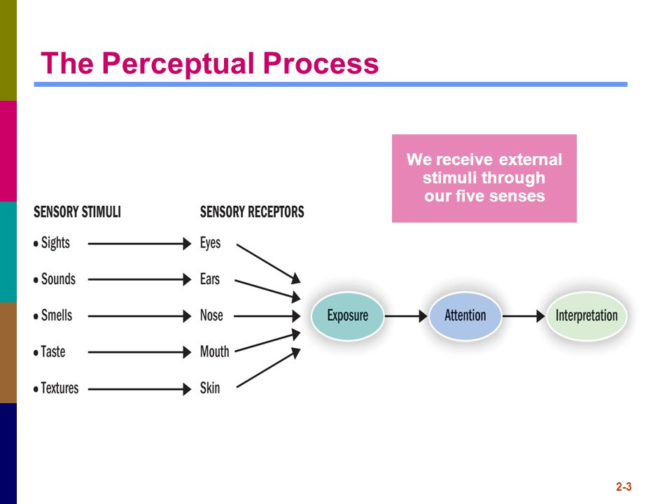 The Perceptual Process