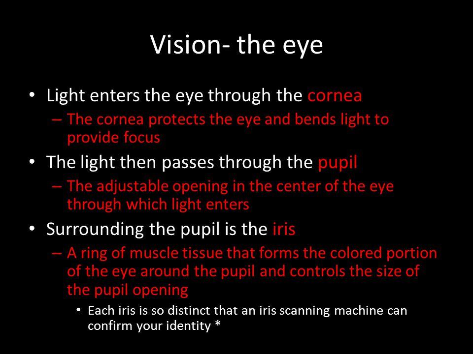 Vision- the eye Light enters the eye through the cornea
