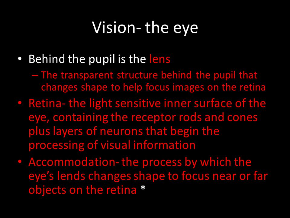 Vision- the eye Behind the pupil is the lens