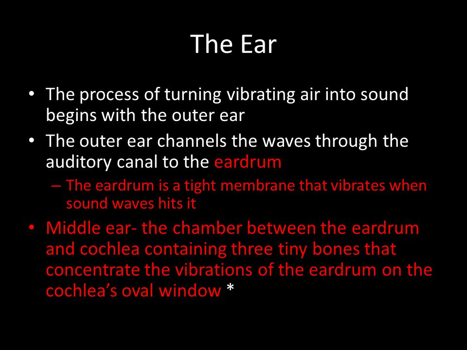 The Ear The process of turning vibrating air into sound begins with the outer ear.