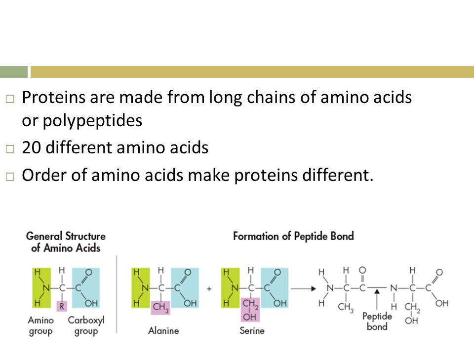 Proteins are made from long chains of amino acids or polypeptides
