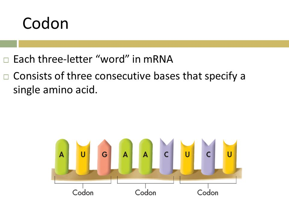 Codon Each three-letter word in mRNA
